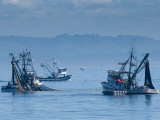 California  Monterey  Fishing Boats  USA