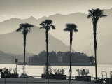 Piedmont  Lake Maggiore  Borromean Islands  Stresa  Lakefront Palms with Isola Bella  Italy