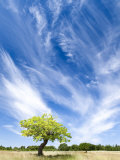Tree and Clouds  Provence  France