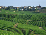 Marne  Champagne  Cramant Village and Vineyards  France