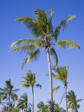 Palm Trees on Ibo Island  Part of the Quirimbas Archipelago  Mozambique