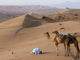 Kneeling to Pray in Desert  Holding Camels by Halters to Prevent Them Wandering Off Amongst Dunes