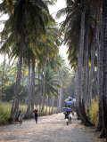 Sao Tomense Walk Through a Plantation Called 'Rio Do Ouro' in the North of the Island of Sao Tomé