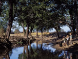 South Luangwa National Park  Shenton Safaris  Group on Guided Walk Stop at a Sunlit Lagoon  Zambia