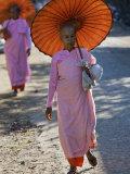 Buddhist Nuns with Bamboo-Framed Orange Umbrellas Walk Through Streets of Sittwe  Burma  Myanmar