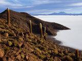 View from the Top of Isla De Pescado across the Salar De Uyuni  the Largest Salt Flat in the World