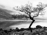 Arbre solitaire sur la rive du Loch Etive, Highlands, Écosse Reproduction d'art par Nadia Isakova
