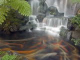Longshan Temple Waterfall with Swimming Koi Fish  Taiwan