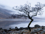 Arbre solitaire sur la rive du Loch Etive, Highlands, Écosse Papier Photo par Nadia Isakova