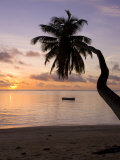Seychelles  Mahe Island  Horizontal Palm  Fairyland Beach  Dawn