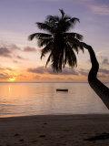 Seychelles  Mahe Island  Horizontal Palm  Fairyland Beach  Dawn