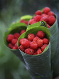 Wild Raspberries Held in the Leaf of a Porcelaine Rose  Sao Tomé and Principé