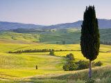 Landscale Near Pienza  Val D' Orcia  Tuscany  Italy
