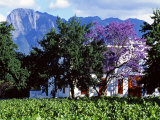 Cape Dutch Farmstead Vineyard Near Franschoek  Western Cape  South Africa