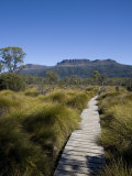 Final Stretch of Overland Track to Narcissus Hut  Mount Olympus on Shores of Lake St Clair in Back