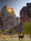 Utah  Zion National Park  the Great White Throne  USA