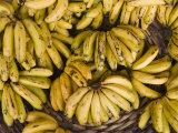 Port Louis  Central Market  Bananas  Mauritius