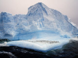 Scotia Sea  Chinstrap Penguins on Iceberg  Antarctica