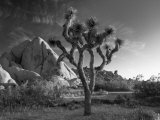 California  Joshua Tree National Park  USA