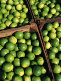 Boxes of Limes  Oxkutzcab Market  Yucatan  Mexico