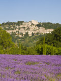 Lacoste and Lavender Fields  Luberon  Vaucluse Provence  France