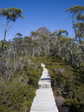 Barn Bluff on the Overland Track  Tasmania  Australia