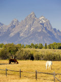 Horses and Teton Mountain Range  Grand Teton National Park  Wyoming  USA