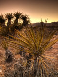 California  Mojave National Preserve  USA