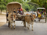 Myanmar  Burma  Bagan  an Ox-Drawn Farm Cart Passes a Horse-Drawn Buggy on Road to Nyaung U Market