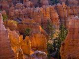 Utah  Bryce Canyon National Park  Near Sunset Point  USA