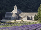 Abbey De Senanque and Lavender Fields  Near Gordes  Vaucluse  Provence  France  Europe