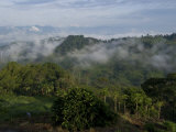 El Caney Plantation and View over Coffee Crops Towards the Andes Mountains  Near Manizales