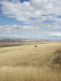 Farmland Off Highway 84  Near Pendleton  Oregon  United States of America  North America
