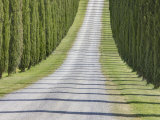 Abstract View of Cypress Trees and their Shadows across Gravel Road  Near Pienza  Tuscany