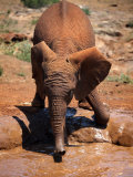 Baby Elephant at the David Sheldrick Wildlife Trust Elephant Orphanage  Nairobi