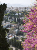 View from Gardens of the Generalife to the Albaicin District  Granada  Andalucia