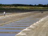 Collecting Salt in Salt Pans  Ars-En-Re  Ile De Re  Charente Maritime  France  Europe