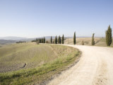 The Cypress Road Near Pienza  Val D'Orcia  Tuscany  Italy  Europe