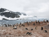 Cuverville Island  Antarctic Peninsula  Antarctica  Polar Regions