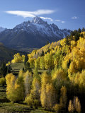 Sneffels Range with Fall Colors Near Dallas Divide  Uncompahgre National Forest  Colorado