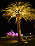 Festival of Light  Sydney Opera House and Palm Tree  Sydney  New South Wales  Australia  Pacific