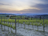 Vineyard at Sunset Above the Village of Torrenieri  Near San Quirico D'Orcia  Tuscany