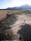 Man Walking on Dry Lake Bed with Llaima Volcano in Distance  Conguillio National Park  Chile