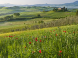 Dawn View of Val D'Orcia Showing Belvedere and Rolling Tuscan Countryside  San Quirico D'Orcia