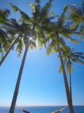 Hammock Between Palm Trees on Beach  Bali  Indonesia  Southeast Asia  Asia