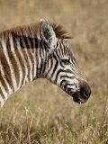Young Grants Zebra