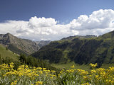 Wildflowers and Mountains Near Cinnamon Pass  Uncompahgre National Forest  Colorado