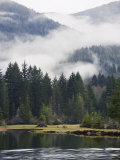 Morning Mist at Port Renfrew  Vancouver Island  British Columbia  Canada  North America