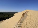 Dunes Du Pyla  Bay of Arcachon  Cote D'Argent  Aquitaine  France  Europe