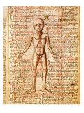 Anatomical Chart of Human Body  Tractatabus de Pestilentia  15th century Manuscript by M Albik